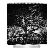 Tree Of Darkness Shower Curtain