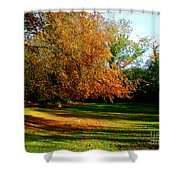 Tree Of Gold Shower Curtain