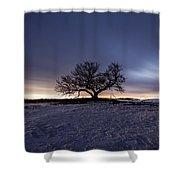 Tree Of Insanity Shower Curtain
