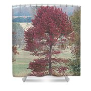 Tree Of Red Shower Curtain
