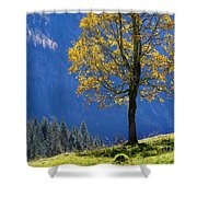 Tree Of Seasons Shower Curtain