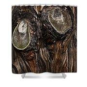 Tree Owl Shower Curtain