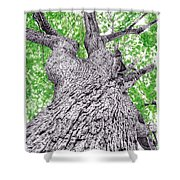Tree Pen Drawing 4 Shower Curtain