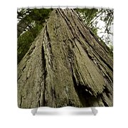 Tree Redwood Ca 1 Shower Curtain