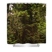 Tree Redwood Ca 6  Shower Curtain