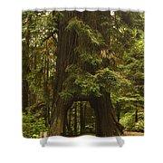 Tree Redwood Ca 7 Shower Curtain