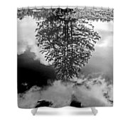 Tree Reflected  Shower Curtain