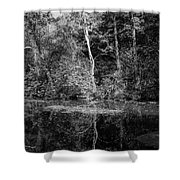 Tree Reflection In Chesapeake And Ohio Canal Shower Curtain