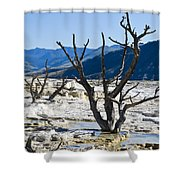 Tree Remains Shower Curtain