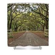 Tree Road Shower Curtain