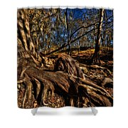 Tree Root Shower Curtain
