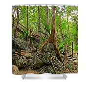 Tree Roots On Rock Shower Curtain