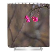 Tree Seed Capsule Pod Bursts Shower Curtain