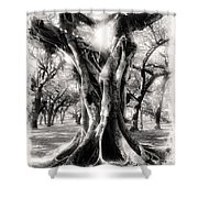 Tree Series 28 Shower Curtain