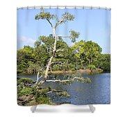 Tree Series 43 Shower Curtain