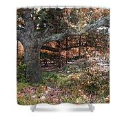 Tree Series 46 Shower Curtain