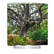 Tree Series 48 Shower Curtain