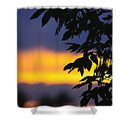 Tree Silhouette Over Sunset Shower Curtain