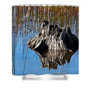 Tree Stump And Reeds Shower Curtain