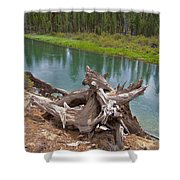 Tree Stump In Des Chutes Nf-or Shower Curtain