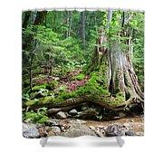 Tree Stump - White Mountains New Hampshire Shower Curtain