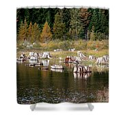 Tree Stumps At Clear Lake Shower Curtain