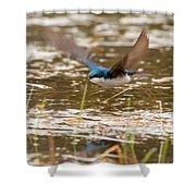 Tree Swallow In Flight Shower Curtain