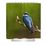Tree Swallow Pictures 27 Shower Curtain