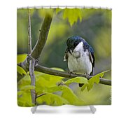 Tree Swallow Pictures 39 Shower Curtain