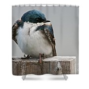 Tree Swallow Pictures 47 Shower Curtain