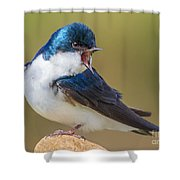 Tree Swallow Squawking Shower Curtain
