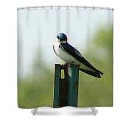 Tree Swallow Wink Shower Curtain