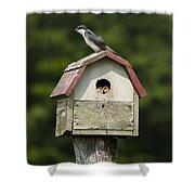 Tree Swallow With Young Shower Curtain