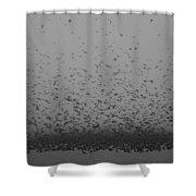 Tree Swallowpalooza Shower Curtain