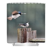 Tree Swallows Mating 1 Shower Curtain