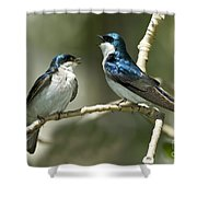 Tree Swallows Singing Shower Curtain
