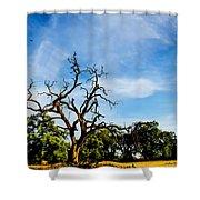 Tree Timestack Shower Curtain