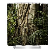 Tree Trunk And Ferns Shower Curtain
