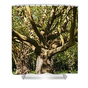 Tree Trunk And Limbs Shower Curtain