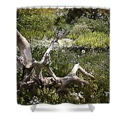 Tree Trunk In The Meadow Shower Curtain