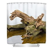 Tree Trunk In Water Shower Curtain