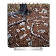 Tree Trunk Roots And Rocks Shower Curtain