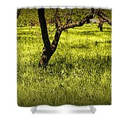 Tree Trunks In A Peach Orchard Shower Curtain