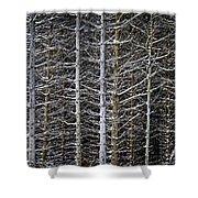 Tree Trunks In Winter Shower Curtain by Elena Elisseeva