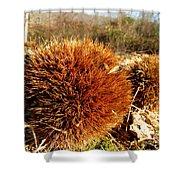 Tree Urchin Shower Curtain