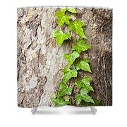 Tree Vine Shower Curtain