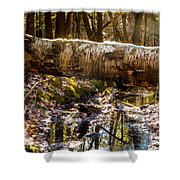 Tree Walk Shower Curtain