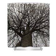 Tree Web Shower Curtain