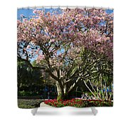 Tree With Pink Flowers Shower Curtain