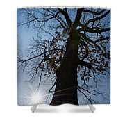 Tree With Sun Shower Curtain